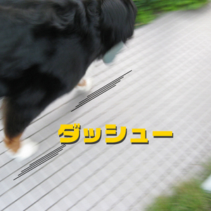 20090822g_2
