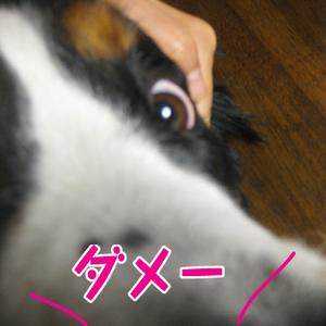 20090927d_2
