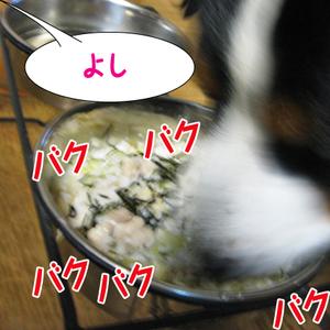 20091110f_2