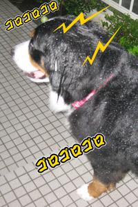 20100429e